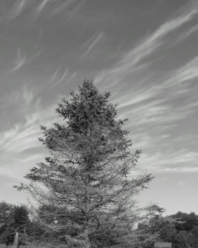 Bnw_collection Bnw_captures Bnw Photography Bnw_magazine Tree_collection  Clouds & Sky Bnw_shot Cloudporn