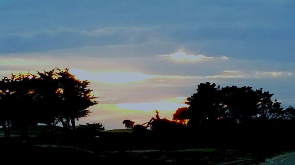 Silhouettes Of Trees Wintertime Pacific Ocean Tree And Sky Seaside Enjoying Life Snapshots Of Life Modesto Photographer California 17 Mile Drive Monterey Ca Home Sweet Home Night Nightphotography Night Photography Nightshot Home Sweet Home ♥ Finding New Frontiers