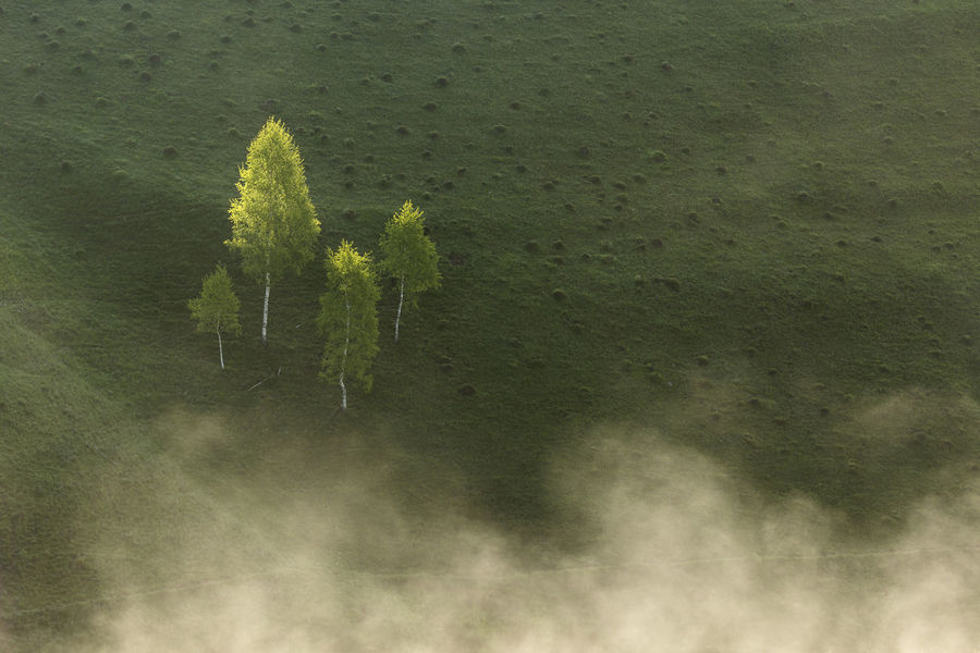 foggy morning in Apuseni Mountains Light Trees Beauty In Nature Close-up Day Fog Freshness Green Color Growth Mist Nature No People Outdoors Plant Sunrise Tranquility