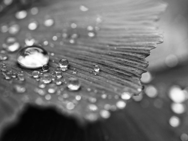 Drops Droplets Nature Fragility Perspectives Macro Close-up Black And White Black & White Black&white Taking Photos From My Point Of View Check This Out Bnw Bnw_collection Drop Collection Droplets Collection Close Up Fine Art Blurred Background Outdoors Check This Out Macro_collection