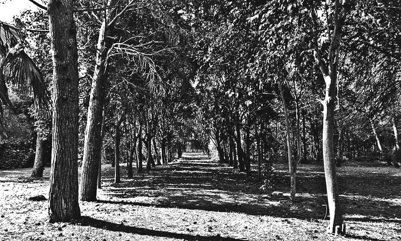 More on https://www.facebook.com/leccecomelacantoio/ Nature Outdoors Tranquility Beauty In Nature Blackandwhite Bnw_life Bnw Photography Blackandwhitephotography Bnw_collection Blackandwhitephotos Bnw_captures Blackandwhite Photography Blackandwhitephoto Bnwphotography Leccecomelacantoio Lecce City Lecce - Italia Lecce B/w Black And White Black & White Nature_collection Nature Photography Naturelovers Park Treescollection