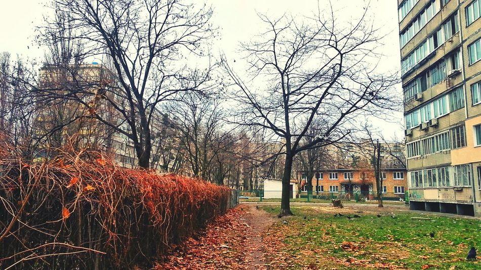 Sky Tree No People Ukraine 💙💛 Nature Kyiv City Orange Color Botany Day Autumn🍁🍁🍁 Autumn 2016 Autumn Autumn Day Building Fence