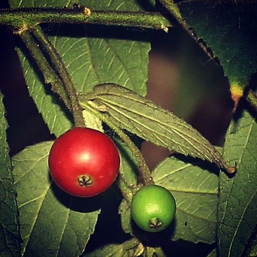 Two generation. Red Green Fruit Fruits Kersen Cherry Nice Love Photooftheday
