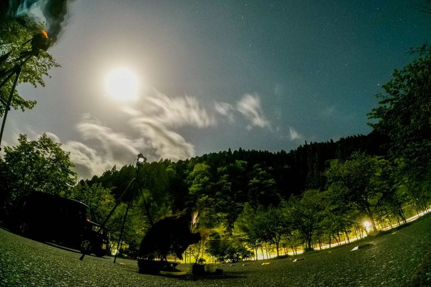 OpenEdit Tree Nature Sky Sun Beauty In Nature Sunlight Scenics No People Outdoors Growth Tranquility Landscape Grass Day Gopro EyeEm Best Shots Tokyo,Japan Galaxy Low Angle View EyeEm Nature Lover People One Person Night Forest