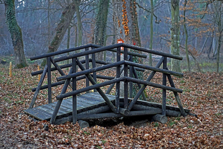 Wooden construction, perfect for posing break during forest hike Autumn Construction Wood Beauty In Nature Day Fall Forest Leisure Activity Moody Weather Nature No People Outdoors Park Park - Man Made Space Tranquility Tree Wood - Material WoodLand
