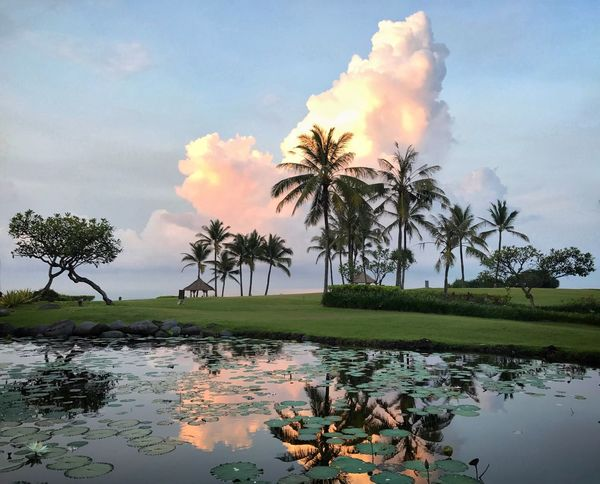 Water Sky Reflection Nature Tree Cloud - Sky Palm Tree Scenics Beauty In Nature Tranquility Outdoors Day Tranquil Scene Bali Travel Destinations Large Cloud The Great Outdoors - 2017 EyeEm Awards Summer Exploratorium