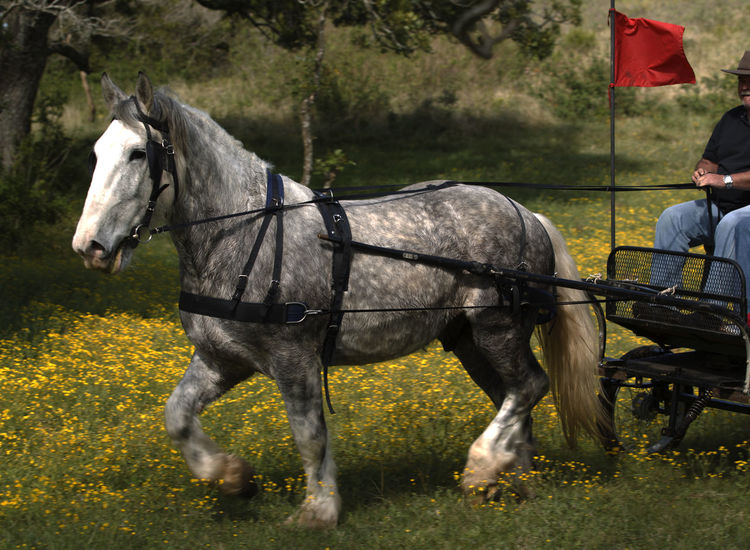 Animal Themes Beautiful Animal Day Domestic Animals Draft Horse EyeEmNewHere Grass Herbivorous Horse Horses Mammal Morning Light Nature No Identifiable Person No People Outdoors Percheron Horse Spring Flowers Tree Working Animal