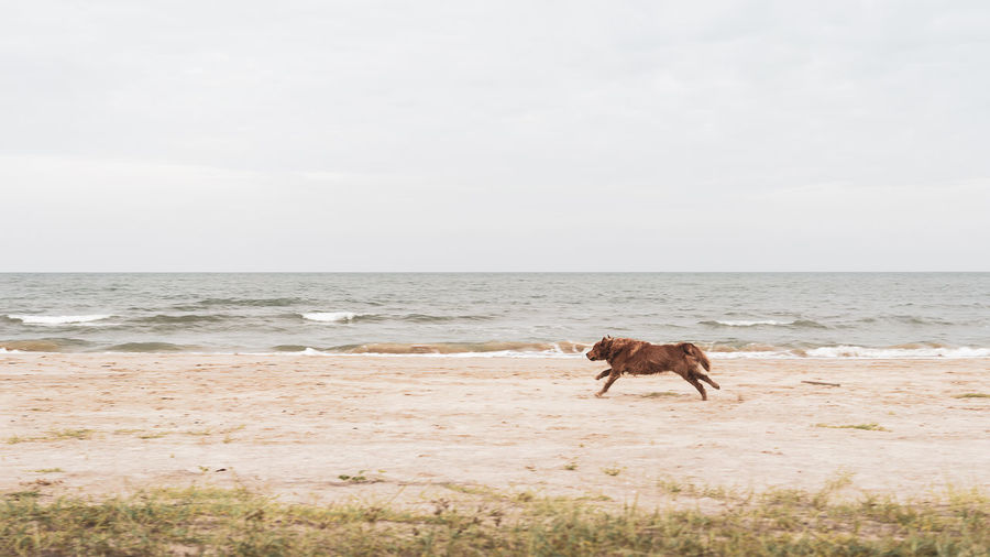 Dog running at beach against sky