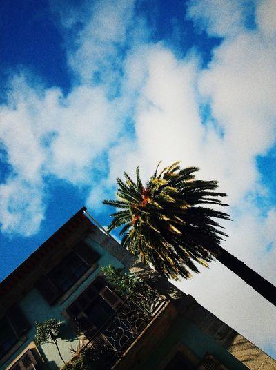 Palmtree Oporto