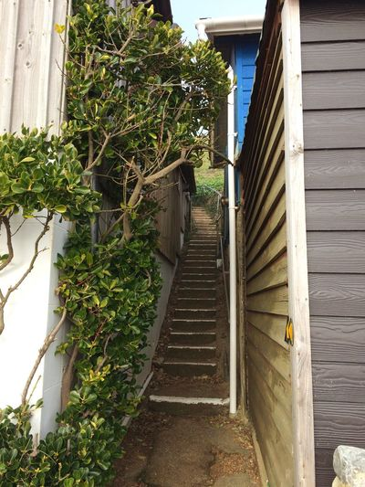 Building Exterior Architecture Built Structure Plant Day Growth No People Outdoors The Way Forward Steps Residential Building Nature EyeAmNewHere Shrub Seaside Beachfront