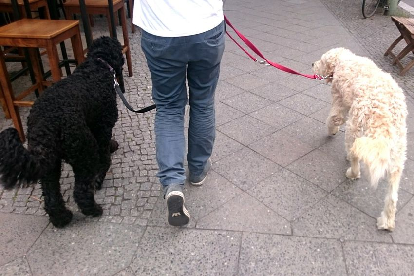 Pets Dog Domestic Animals One Animal Pet Owner Pet Leash Purebred Dog Poodle One Man Only Mammal Low Section Only Men Mature Adult Adult One Person Animal Hair People Friendship Adults Only Outdoors Poodle