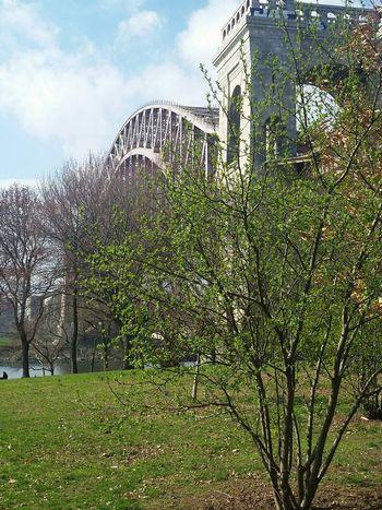 One of my favorite bridges and places... my backyard... Astoria, Queens Astoria Park Hells Gate Bridge EyeEm Best Shots EyeEm Nature Lover Skyporn Bridgeporn Blooming In The Process Spring Into Spring