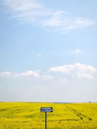 Yellow Yellow Flowers Field Nature Landscape Sos Road Trip Romania Eastern Europe Timisoara Arad Autostrada Highway