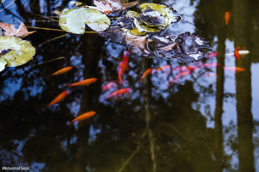 Landscape Fish Photography Colorful Feeding  Technical Effect Photoshop Cold Day Color Photography