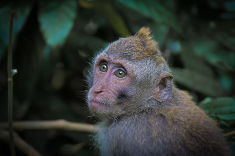 Animal Themes Animal Wildlife Animals In The Wild Close-up Day Monkey Monkey Forrest Nature No People One Animal Outdoors