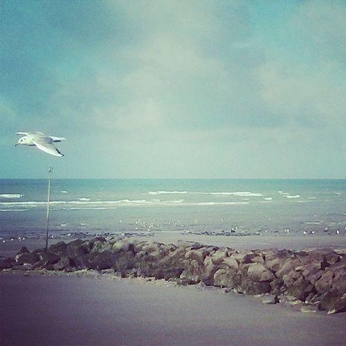 Wimereux Englishchannel Sea