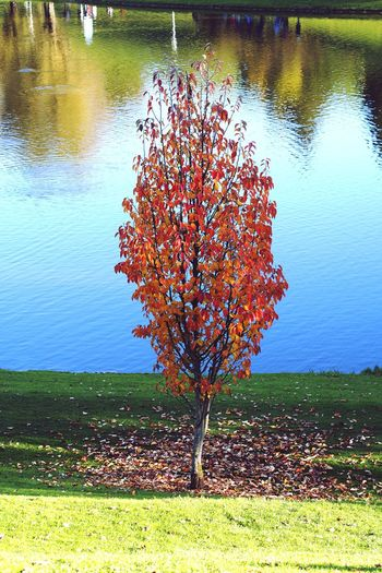 Autumn foliage in Munich Olympic Park. Nature Water Reflection Tree Grass Growth Beauty In Nature Outdoors Multi Colored No People Scenics Day Freshness Olympic Park  Autumn Colors Autumn Leaves Autumn Fall Fall Colors Red Orange Yellow