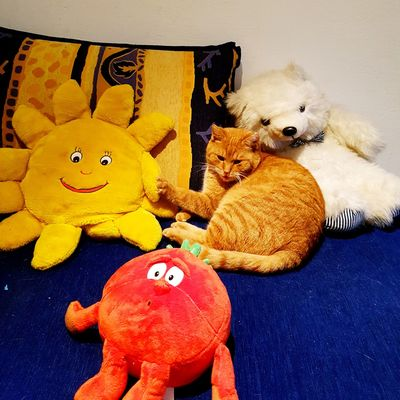 Friends Animal Representation Teddy Bear Toy Cat Lovers Cats Of EyeEm Cat Cat♡ Cats 🐱