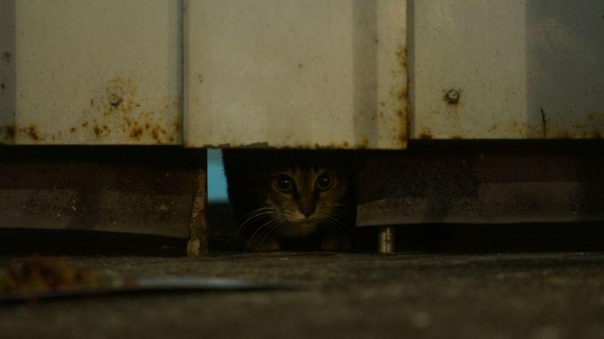Kot 野良猫 Katze Gato Gatto Cats 🐱 Cat Photography Cats Cats Of EyeEm Chat Gato Meow Stray Cat 猫 Neko Cat 貓