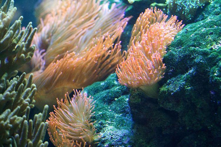 Close-up of sea anemone in sea