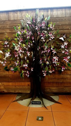 Hope Plant Flower No People Growth Nature Beauty In Nature Day Tree Fragility Indoors