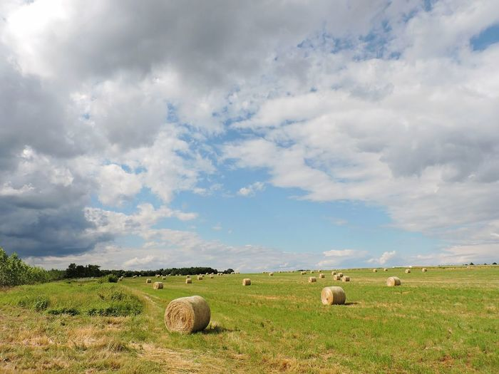 Rural Scene Hay Bale American Bison Agriculture Field Hay Bale  Grazing Sky Grass