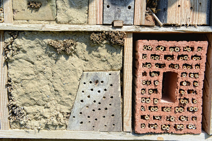 insect hotel made of wood and feathers. for wild bees Wild Animal Insektenhaus Insektenhotel Insect Shelter Insect Hotel Solitary Bee Wildbienen Wildbee Insect Insects  Osmia Bicornis Solitarybee Bee 🐝 Bees