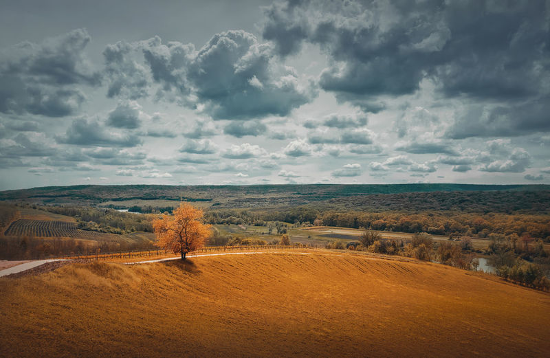 Picturesque autumnal landscape with beautiful yellow shades and a lone tree near the field