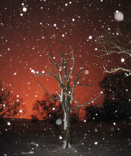 fill in flash Cold Yet Warm Colour Flash Light Pollution Night Sky Orange Sky Snow Falling Tree