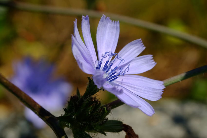 Flower Head Flower Petal Insect Purple Close-up Animal Themes Plant Stamen