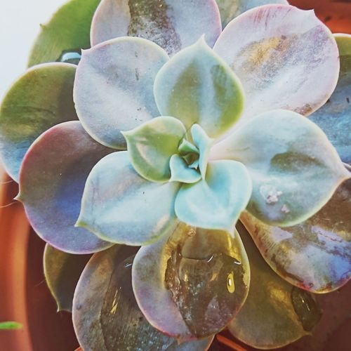 Nature Indoors  Freshness Day Beauty In Nature No People Fragility Close-up Succulent