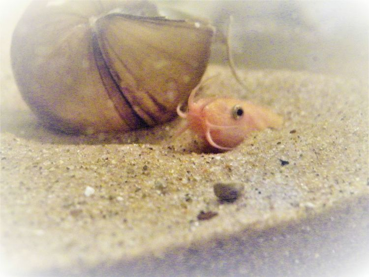 Pet Portraits Fish Fish Tank Sand Hidden Hiding Weather Fish Dojo Orange Peaceful Happy Fish