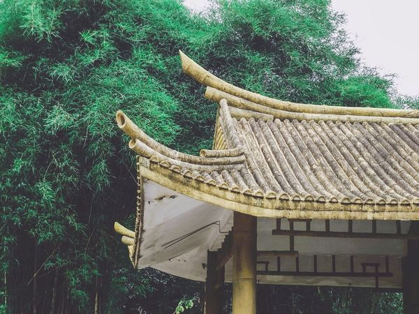 Green Green Green!  Pavilion Bamboo Bamboo Forest Bamboo Tree Bamboo House Roof Rooftop Rooftop View  屋根 屋根 Roof 屋頂