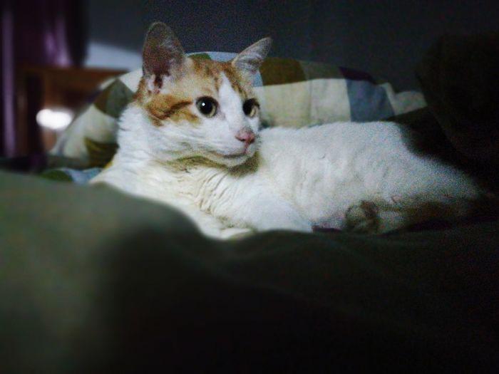 Blues My Cat!