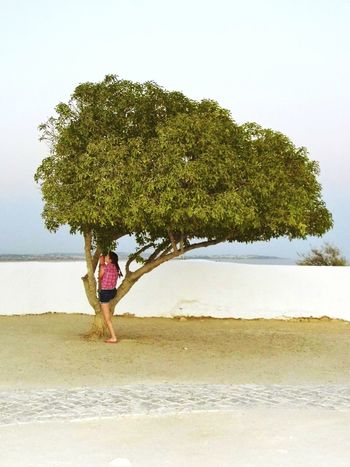 Tree Portugal Girl Evening Sky Holiday Vacation Stylized Curve White Color Green Color