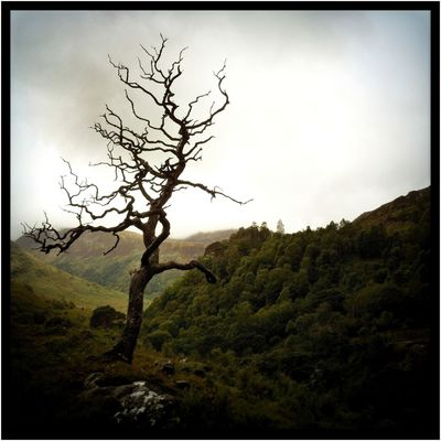 Pictures from Glencoe Valley (Hipstamatic) XIII Glencoe Scotland Square Bare Tree Beauty In Nature Day Hipstamatic Landscape Lawoe Lone Nature No People Outdoors Sky Tranquility Tree