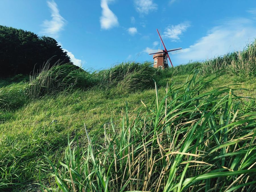 The Famous Windy Hill in Geoje, South Korea. Geoje Island Windy Hill Sky Growth Plant Land Nature Field Green Color Day Cloud - Sky No People Grass Beauty In Nature Landscape Outdoors