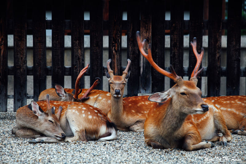View Of Deer Lying Down