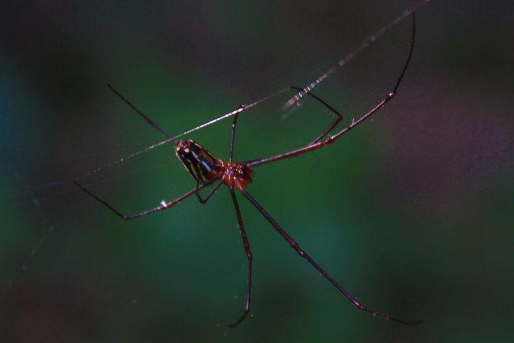 Spider Taking Photos Hello World
