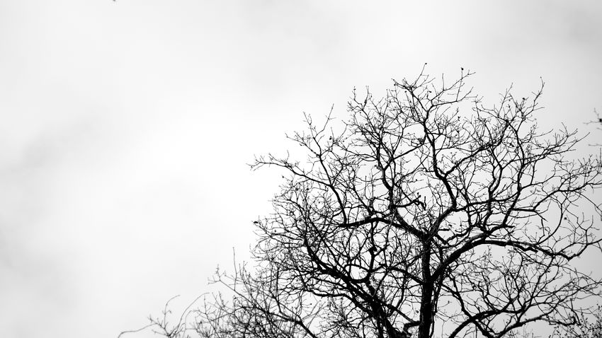 Tree Flying Nature Sky No People Branch Day Outdoors Blackandwhite Tree Black & White B&w Sonyalpha Sony A6000 Wooden Post