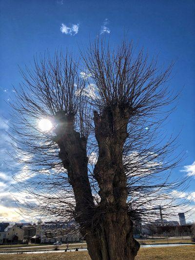 Sky Nature No