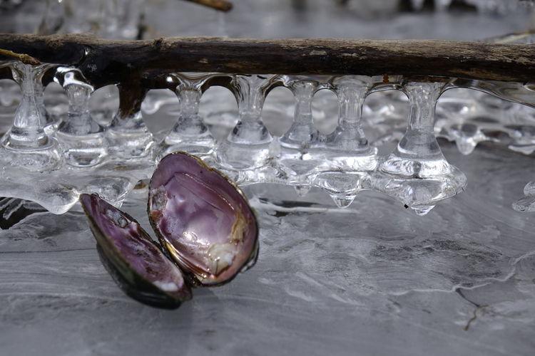 Close-Up Of Animal Shell On Frozen Lake