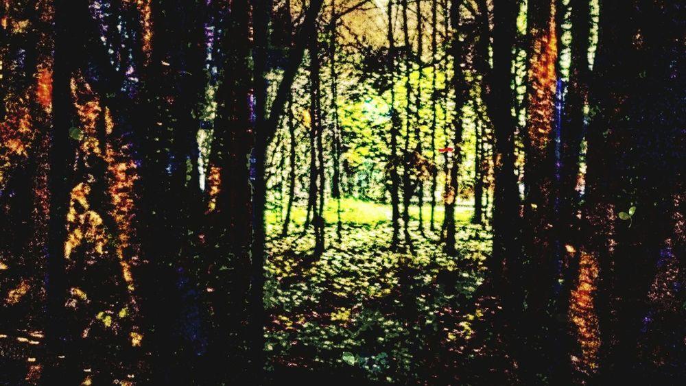 Autumn🍁🍁🍁 Colorful Murmansk EyeEm Best Shots EyeEm Gallery Nature EyeEm Best Shots - Nature Beautiful EyeEm Best Shots - Landscape Nice Forest Trees Beautiful Landscape Autumn Russia Russian Nature