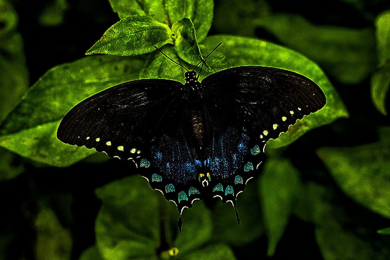 insect, animal themes, animals in the wild, one animal, butterfly - insect, leaf, animal wildlife, nature, butterfly, no people, day, close-up, outdoors, plant, full length, fragility, beauty in nature, freshness