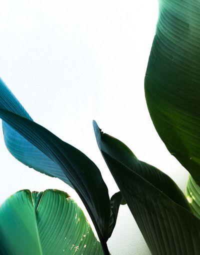 Tropical leaves EyeEmNewHere Iphonephotography The Week On EyeEm Leaves🌿 Tropical Leaf