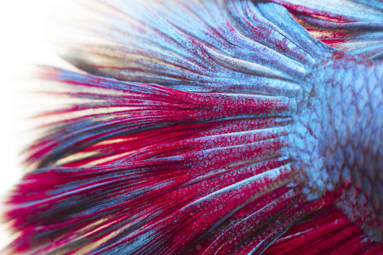 Full frame shot of fish tail