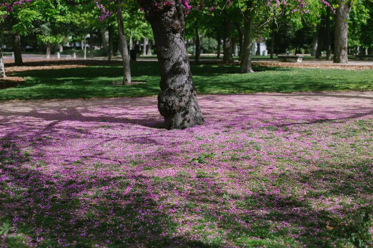 View of purple flowering plants in park