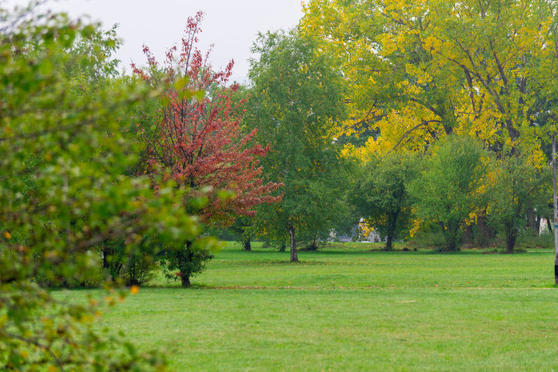 Autumn Park Fall Still Green Warmth September