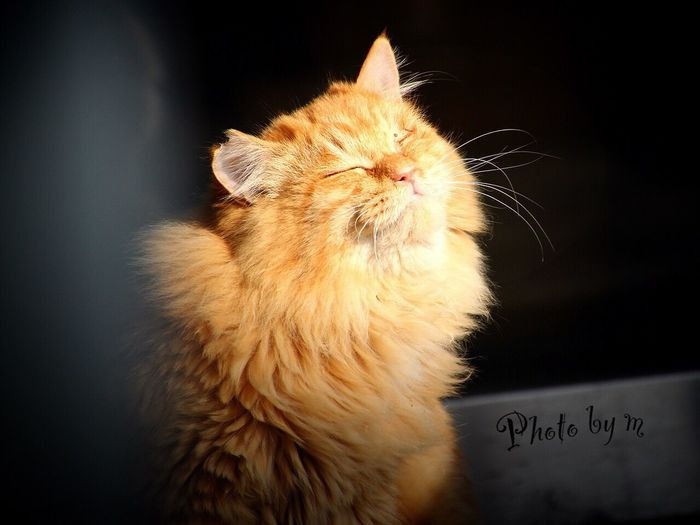 Cat Stray Cat 野良猫 Cat♡ 猫 Animal Photography EyeEm Best Shots 茶猫 ゴージャス猫