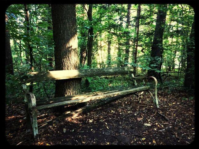 Bench Mountain Biking Nature